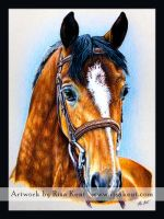 Westley by equusrevelrous