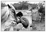 The Cow Whisperer.... by Indiangal