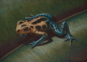 Poison Dart Frog by jfapeacock
