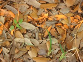 Day 54: Painted Leaves by Caedy