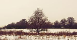 Tree of Knowledge by amyjls
