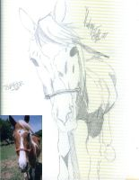 sketch of thumper by Audrey-Taft