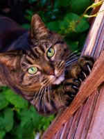 Cat stretch two by The-Human-Abstract91