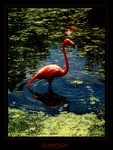 Flamingo by angelicque