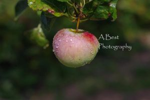 apple by FayolaPhotography