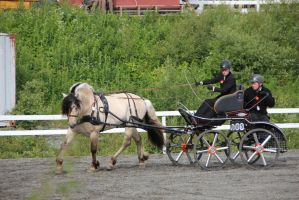 Horse driving 1 by Chance-STOCK