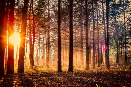 Forest sunset by SeventhSon77