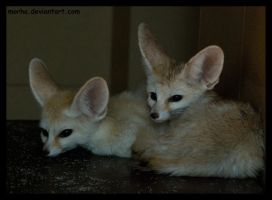 big-eared duo by morho