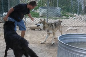 Wolf Sanctuary 8 by sugarpoultry