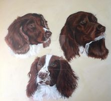 Springers by SheenaBeresford