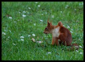 squirrels stretching by morho