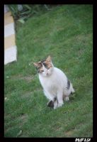 CAT_9 by mufash