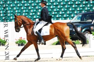 William Coleman Dressage II by zeeplease