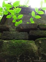 Green leaves on the brick. by eleedinh