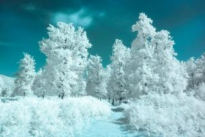 Infrared forest by mugurelm