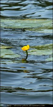 Water-flower by ukraine-photo