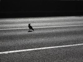 crow by samwyse
