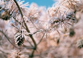 Frosty Morning Series - Img. 4 by DVeditor