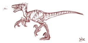 raptor sketch by mangakasan