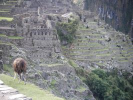 Different parts of Machu Piccu by burgeryoyo