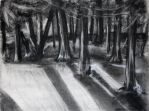 Charcoal Forest by rloricardo