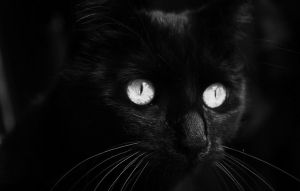 Black Cat II by Akito666z