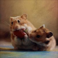 Greedy Hamster II by StacyD