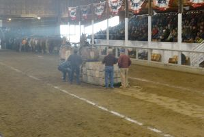 Horse Weight Pulling Competition 11 by Miss-Tbones