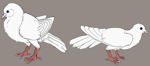 Two Doves by Joysweeper