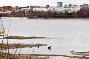 Waterscape with dog by Sulde