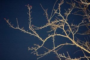 Branches III by adamsik