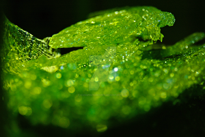 Green Ice by iconsPhotography