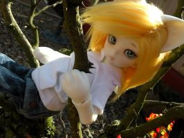 Climbing tree's 1 by stievel