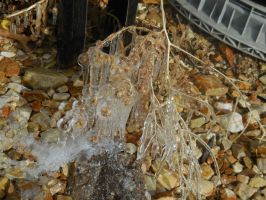 Plant Icicles by Sanluris