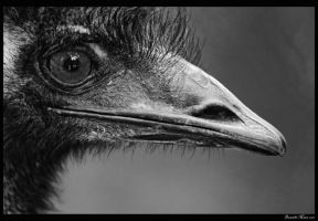 Emu Black and White by DanielleMiner