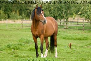 Sha 7 by Colourize-Stock