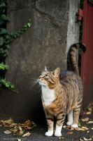 .curious.kitty. by Gryczka