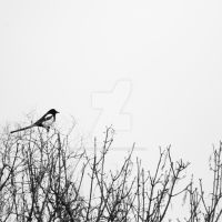 One for Sorrow by lonesomeaesthetic