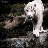 White Tiger I by z-zaphs