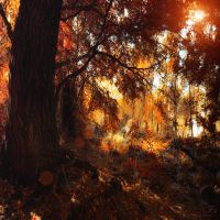 under the autumn tree by ildiko-neer