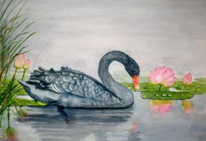 Black Swan by Shashikanta