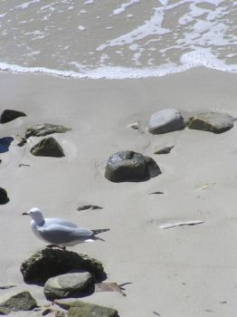 Seagull combs the beach. by jellybush