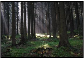 dark forest by Cooad