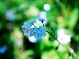 Blue flower by NurNurIch