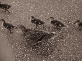 Disney - Mama Duck and Babies by PiggyNetworkCenter