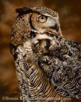 Keeping Watch-Great Horned Owl by bonnielatham