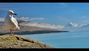 Mount Cook by AustrianCat