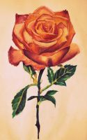 roses are by flowwwer