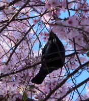 tui in tree 1 by hamptonboss