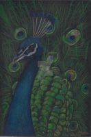 Peacock by SpencerGirl